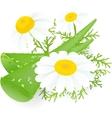 Aloe-vera and camomiles vector image