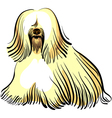 color sketch of the dog tibetan terrier breed sitt vector image vector image