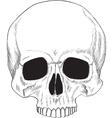 human skull isolated vector image