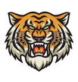 angry tiger head logo template vector image vector image