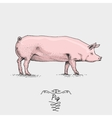 pig engraved hand drawn in vector image vector image