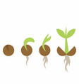 set of phases plant growth vector image vector image
