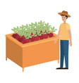 wooden shelf with vegetables and seller man vector image