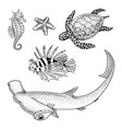 sea creature or fishes cheloniidae or green turtle vector image