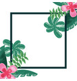 tropical flower leaves foliage frame decoration vector image vector image