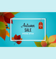 autumn sale banner design with discount label vector image