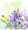 beautiful spring background with iris flowers vector image
