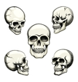 views of human skull vector image vector image