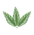 green branch with multiple leaves vector image vector image