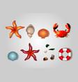 sea set of lifebuoys shells crab starfish and sea vector image