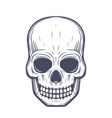 skull front view over white vector image vector image
