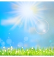 Summer grass in sun light EPS 10 vector image