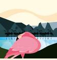 flamingo in the water vector image