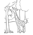 Giraffe eating leaves from the tree vector image vector image
