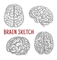 Human brain at different angles engraving sketches vector image vector image