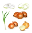 Onion set vector image