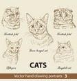 set hand drawing cats 3 vector image vector image
