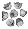 graphic hand-drawn ink set of tulip vector image vector image