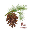 realistic botanical ink sketch of colorful fir vector image vector image