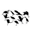 heron and stork bird silhouettes vector image vector image