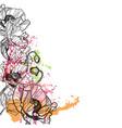 poppy splash flower colorful summer background vector image
