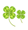 realistic detailed clover green plant vector image