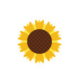 sunflower icon design template vector image vector image