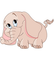 baby elephant vector image vector image
