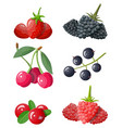 berry icon set vector image vector image