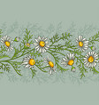 chamomile pattern vector image vector image
