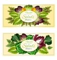 Fresh leaf vegetables and salad greens banners set vector image vector image