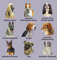 set portraits dog breeds 4 vector image
