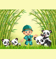two cute panda in a bamboo forest vector image