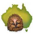 Echidna and Australia map vector image vector image
