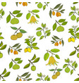 fresh citrus seamless pattern vector image