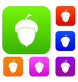 acorn set color collection vector image vector image