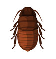 black cockroach insect pest control and vector image vector image