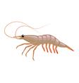 cartoon shrimp vector image