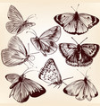 collection hand drawn butterflies for design vector image vector image