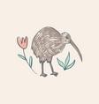 cute kiwi bird australian animal cartoon doodle vector image