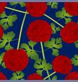red ranunculus flower on blue background vector image vector image