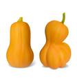 set realistic pumpkin vector image