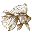 engraving gold fish vector image