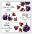 fruit banner for eco store with fig and strawberry vector image vector image