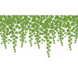 green ivy wall climbing plant hanging from above vector image vector image