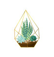 green succulent plant pot in geometric gold vector image vector image