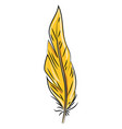 orange feather on white background vector image vector image