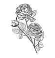 sketch design elements plant peony rose vector image