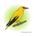African Golden Oriole bird educational game vector image vector image