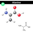 Alanine chemical structure and model vector image vector image